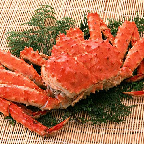 金汤帝王蟹