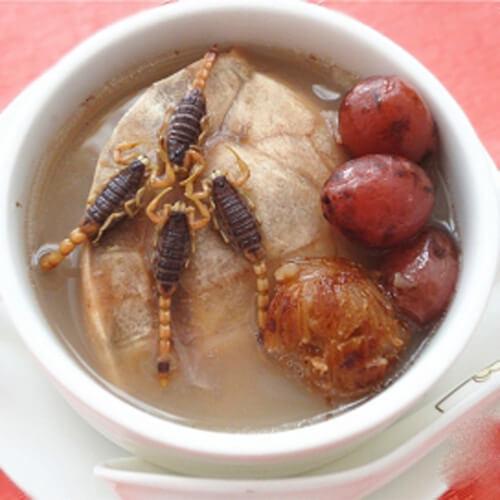 蝎子龟祛湿汤