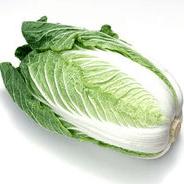 白菜属于什么科