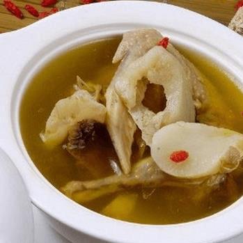 营养丰富的鸽子汤