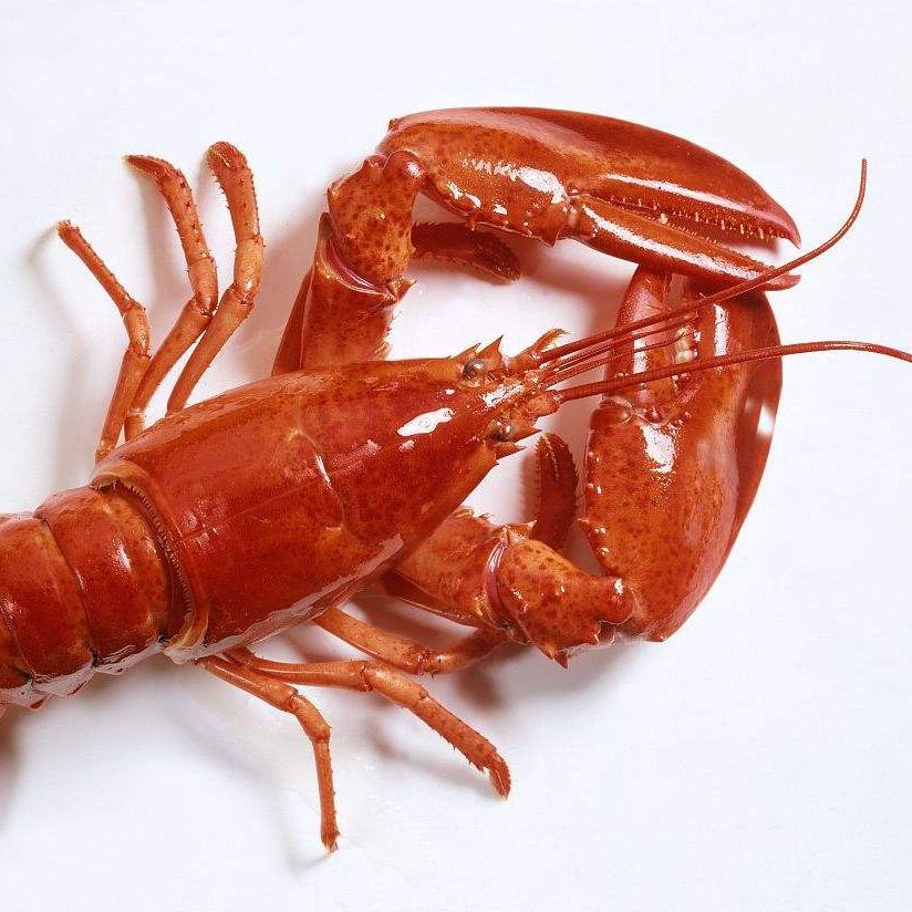 海鲜不能和什么一起吃