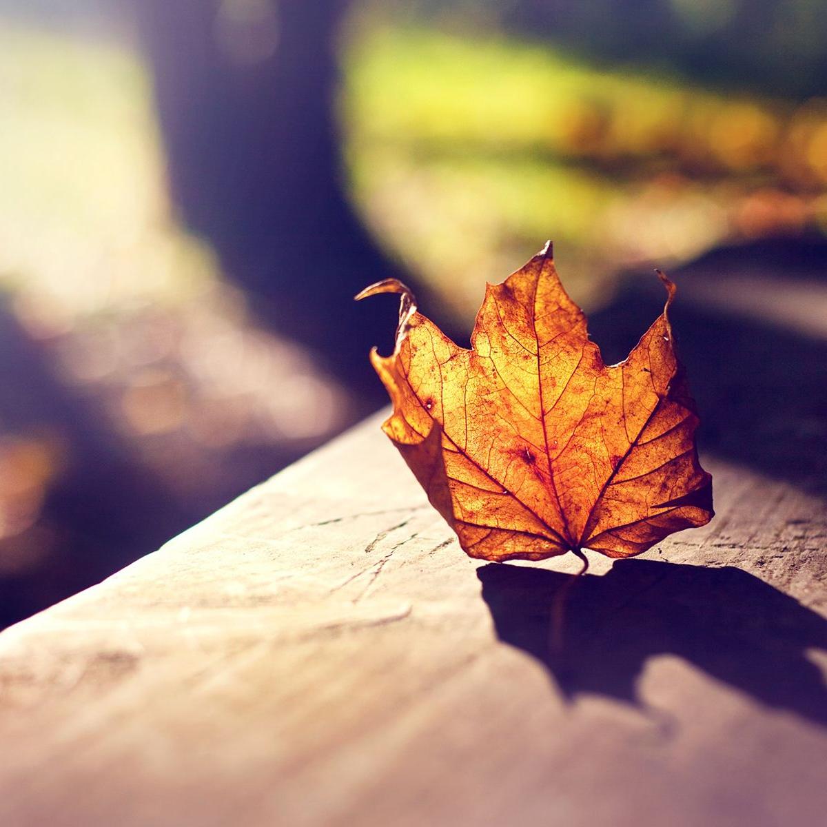 秋季养生吃什么