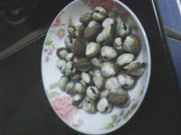 食欲满满的花蛤