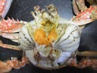 鲜美的清蒸海蟹