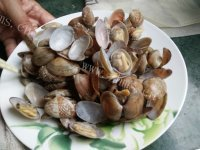 美味的花蛤