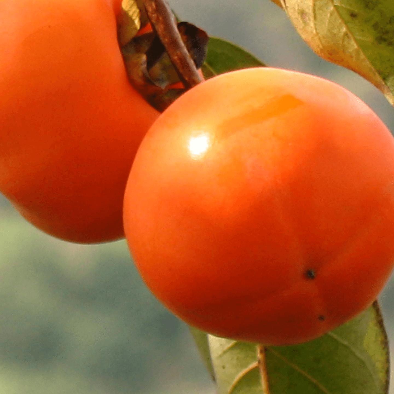 柿子不能和什么一起吃