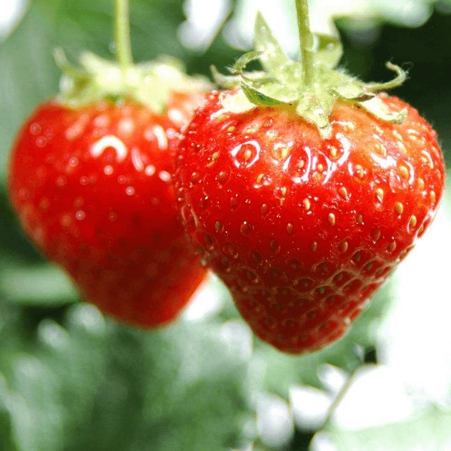 血糖高吃什么水果好