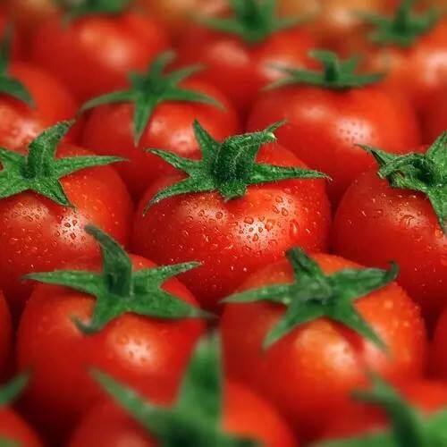 西红柿美容的妙招有哪些