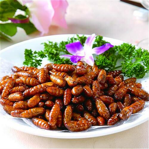 美味的吮指椒盐蝉蛹