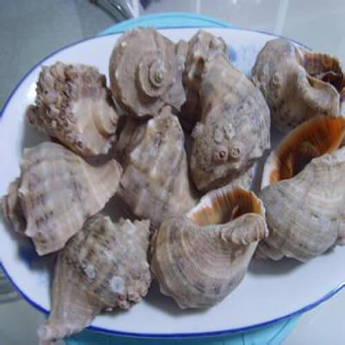 美味的清水煮海螺