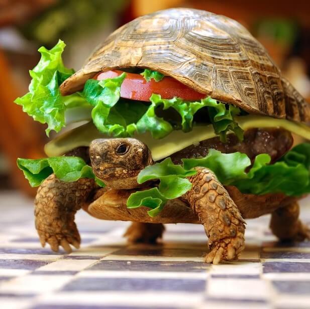 小乌龟汉堡