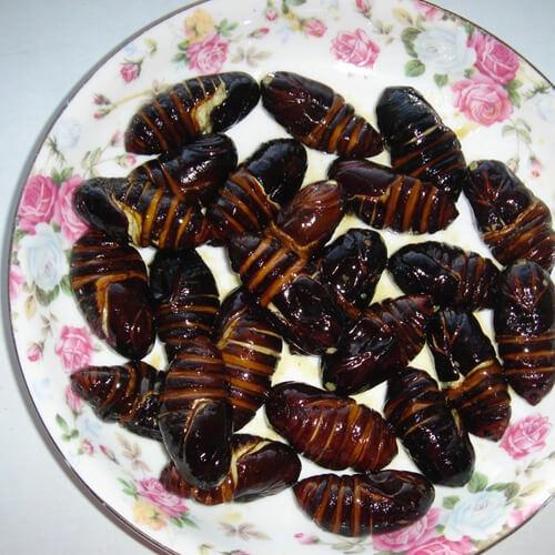 炒茧蛹(简单版)