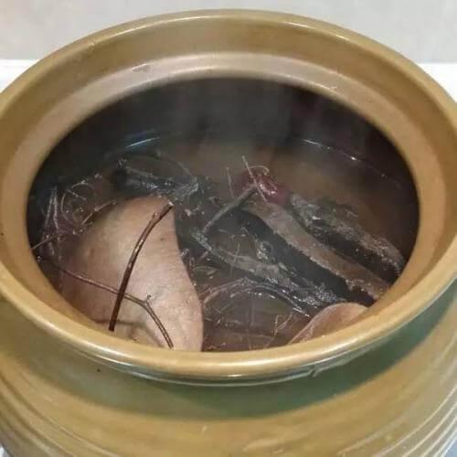 土茯苓灵芝草龟汤
