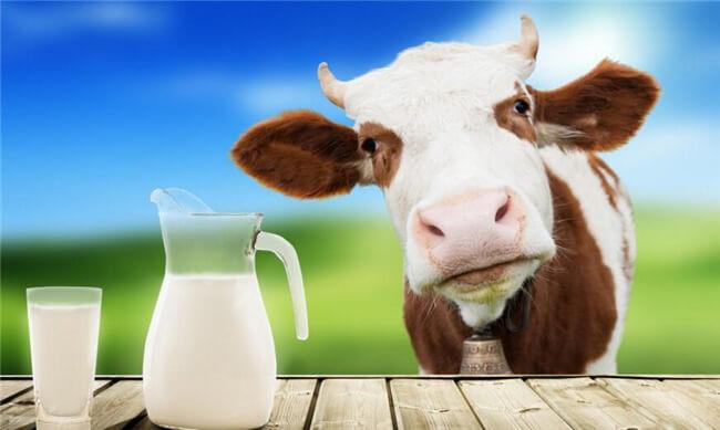 德瑞赛牛奶加盟流程