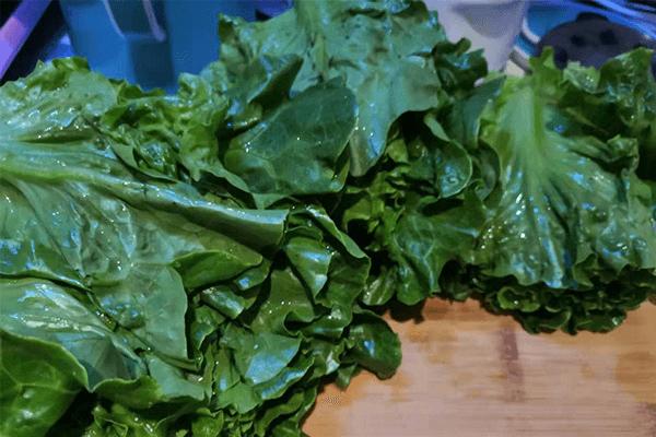 有這樣美味的蠔油生菜,你還敢說吃不下飯嗎第一步