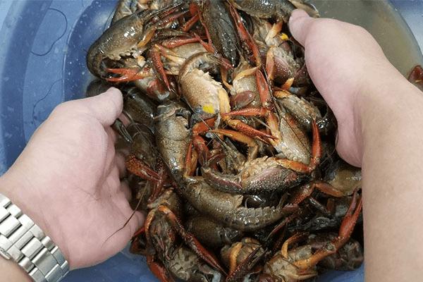家庭版小龙虾,夜宵不用等天黑第四步