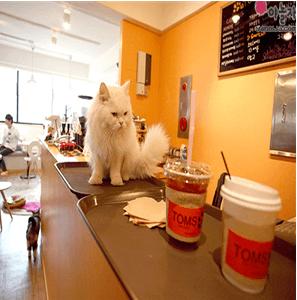 宠物主题咖啡厅
