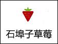 石埠子草莓