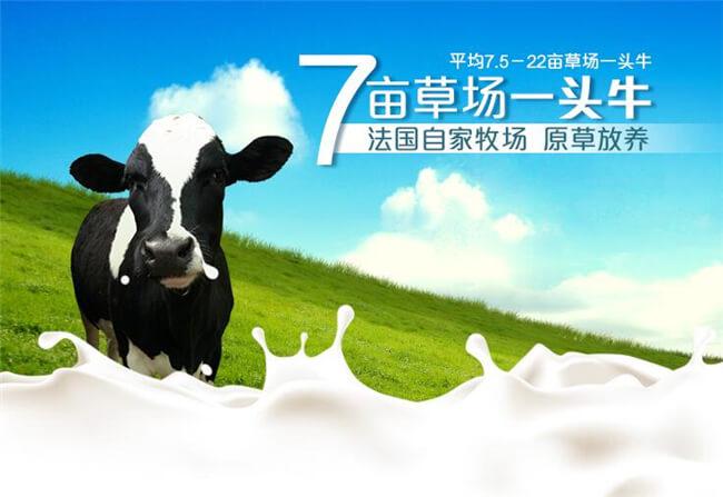 荷兰乳牛饮品加盟详情