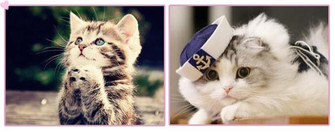 甜猫奶茶品牌故事1