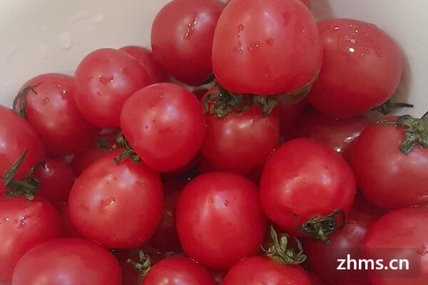 水果西红柿,神奇的小西红柿不要错过哦!