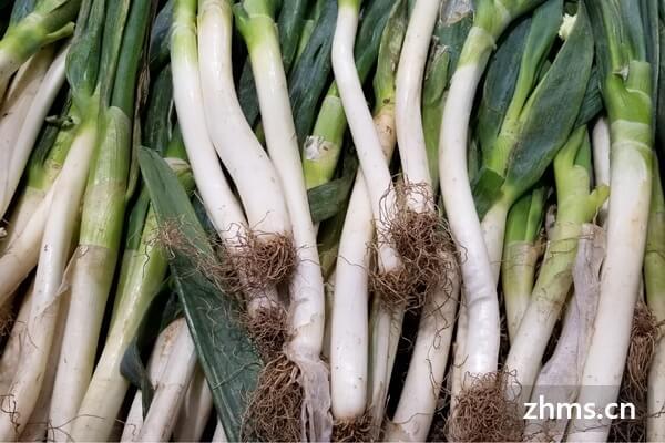 大葱品种介绍