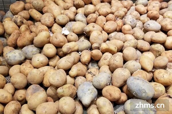 馬鈴薯的做法多種多樣