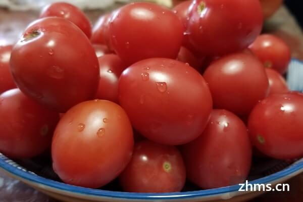 茄子西红柿的家常做法,你会做哪些呢