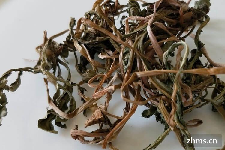 蒲公英茶的功效与作用有哪些
