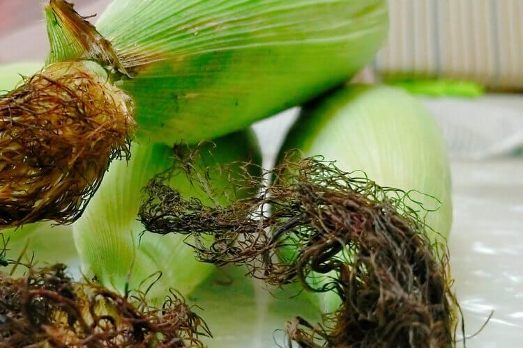 刚刚在超市里买了一些虫草,虫草花炖鸡汤可以放玉米吗?