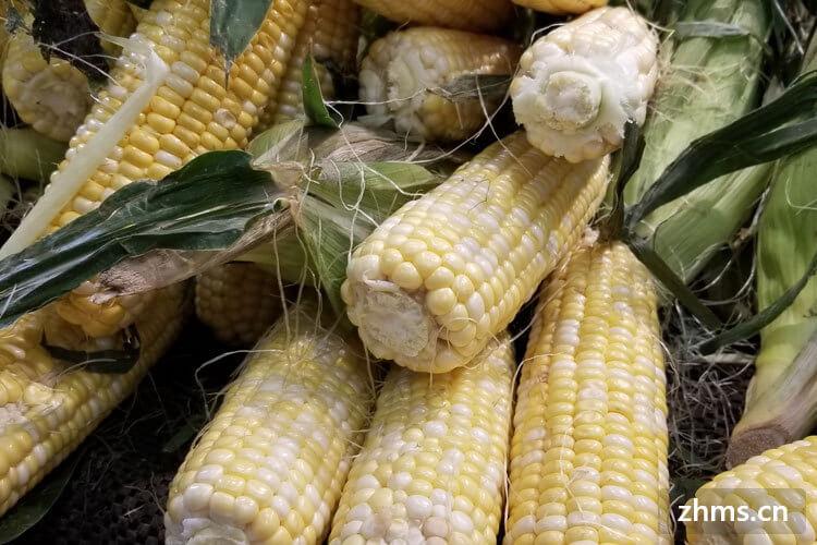 吃玉米会瘦吗