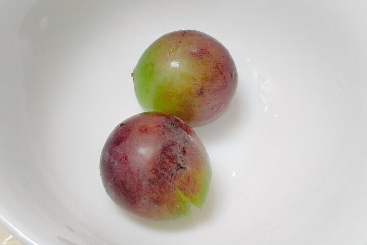 山葡萄优良品种哪里有?山葡萄口感不错