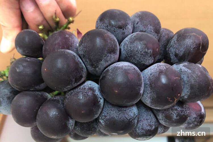 野葡萄的营养价值