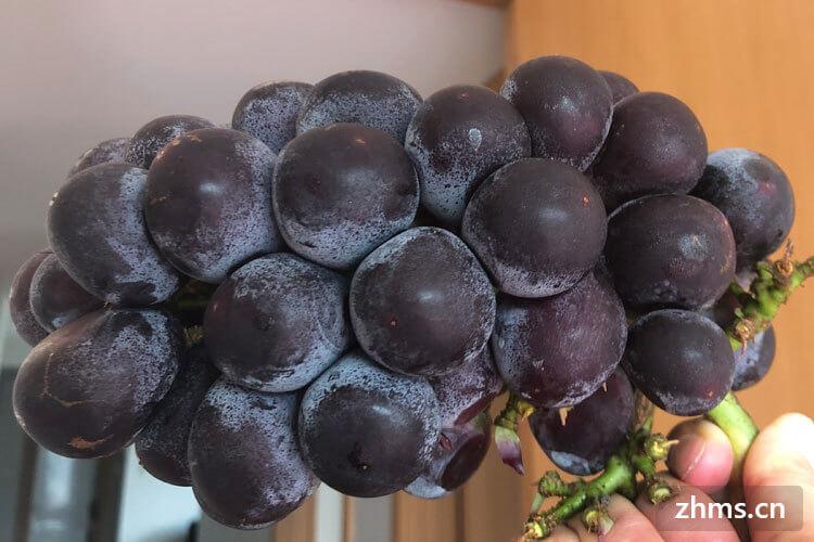 大棚葡萄种植技术是什么样?大棚葡萄的产量一般多少?
