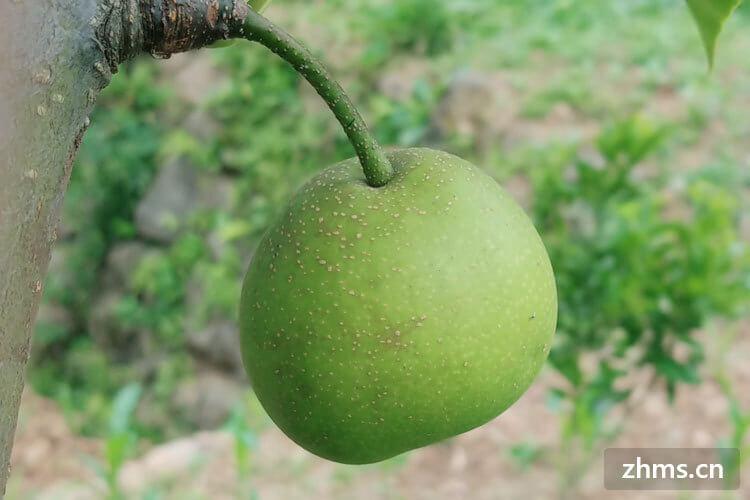 最贵的梨子是什么梨子