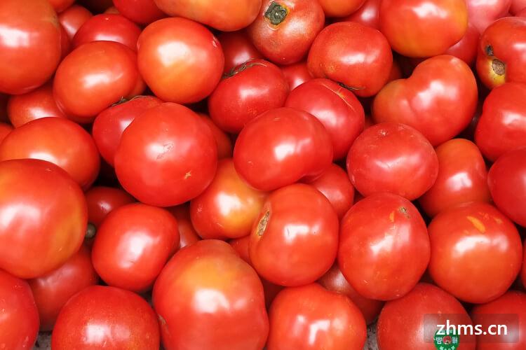 西红柿肉末
