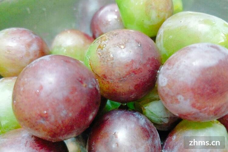 葡萄是什么季节的水果