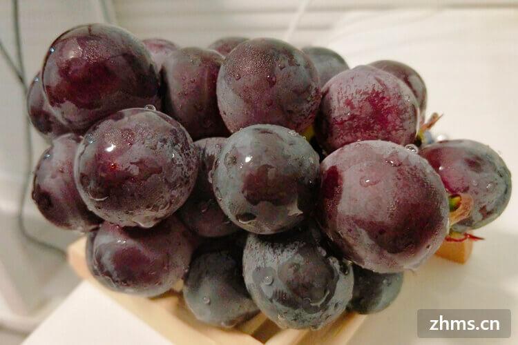 葡萄有什么品种