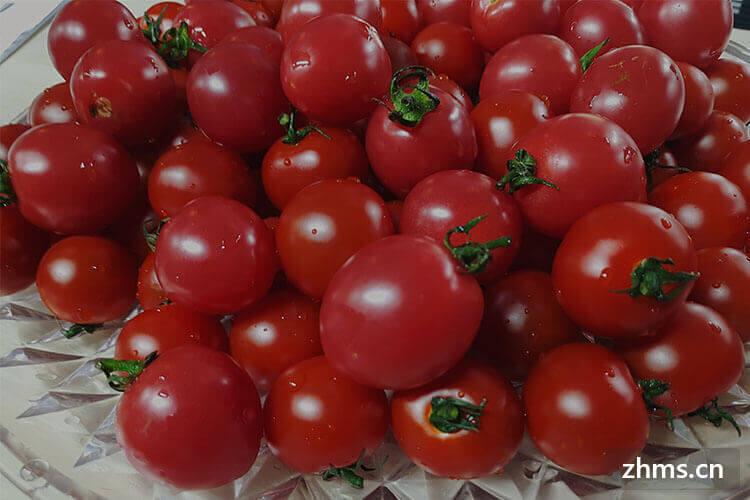 怎么做番茄酱