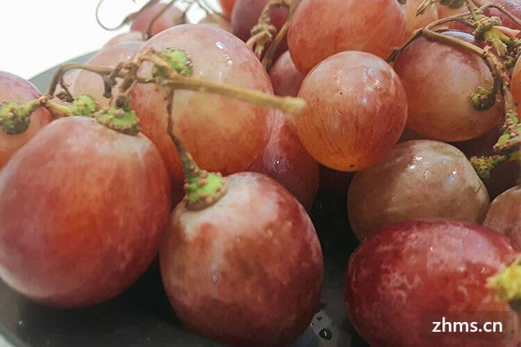 葡萄种植技术有哪些