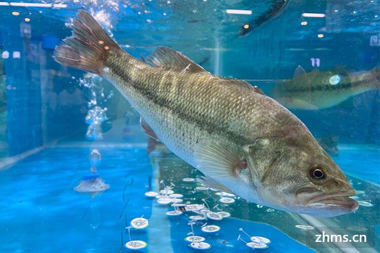清蒸鲈鱼怎么做好吃,清蒸鲈鱼的做法技巧
