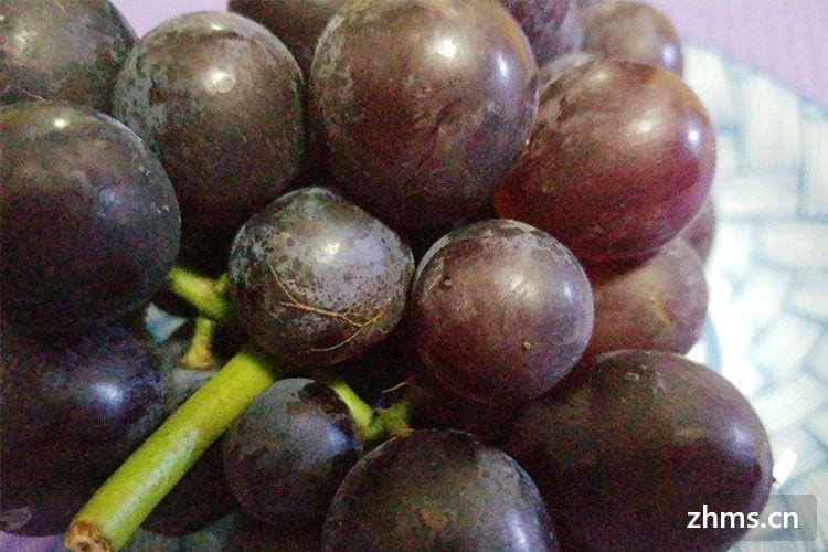 酿酒葡萄品种