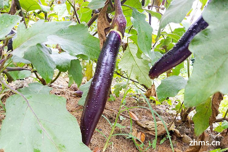 茄子要蒸多长时间能熟?茄子的做法