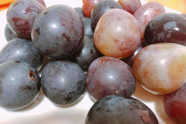 山葡萄很好吃,但山葡萄怎么食用呢