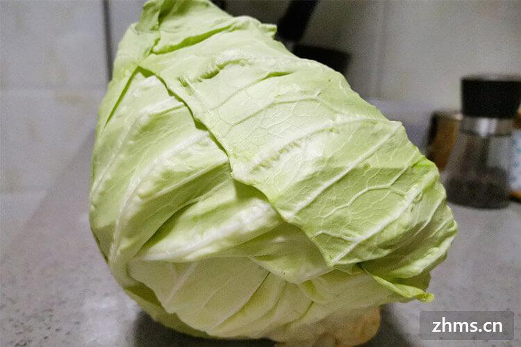 圆白菜怎么吃