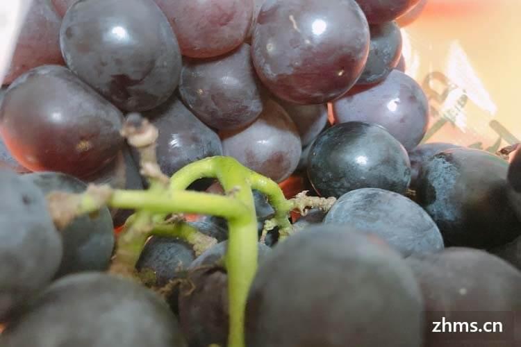 做葡萄酒的葡萄和食用葡萄有区别吗?
