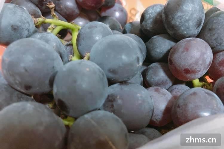 山葡萄是野葡萄吗