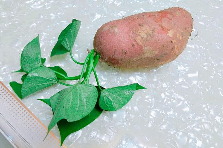 想吃红薯,想问吃红薯拉不出是是真的吗?