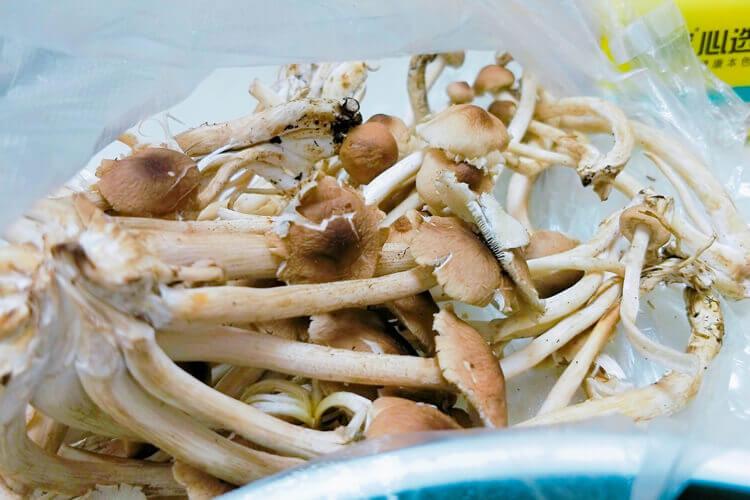 想做一些乌鸡汤喝,茶树菇虫草花炖乌鸡汤怎么做?
