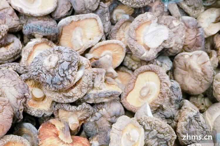想做一个香菇炒青菜,那么香菇炒青菜青菜怎么切呢?